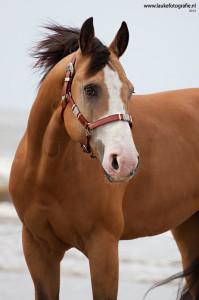 horse-whiskey-photo